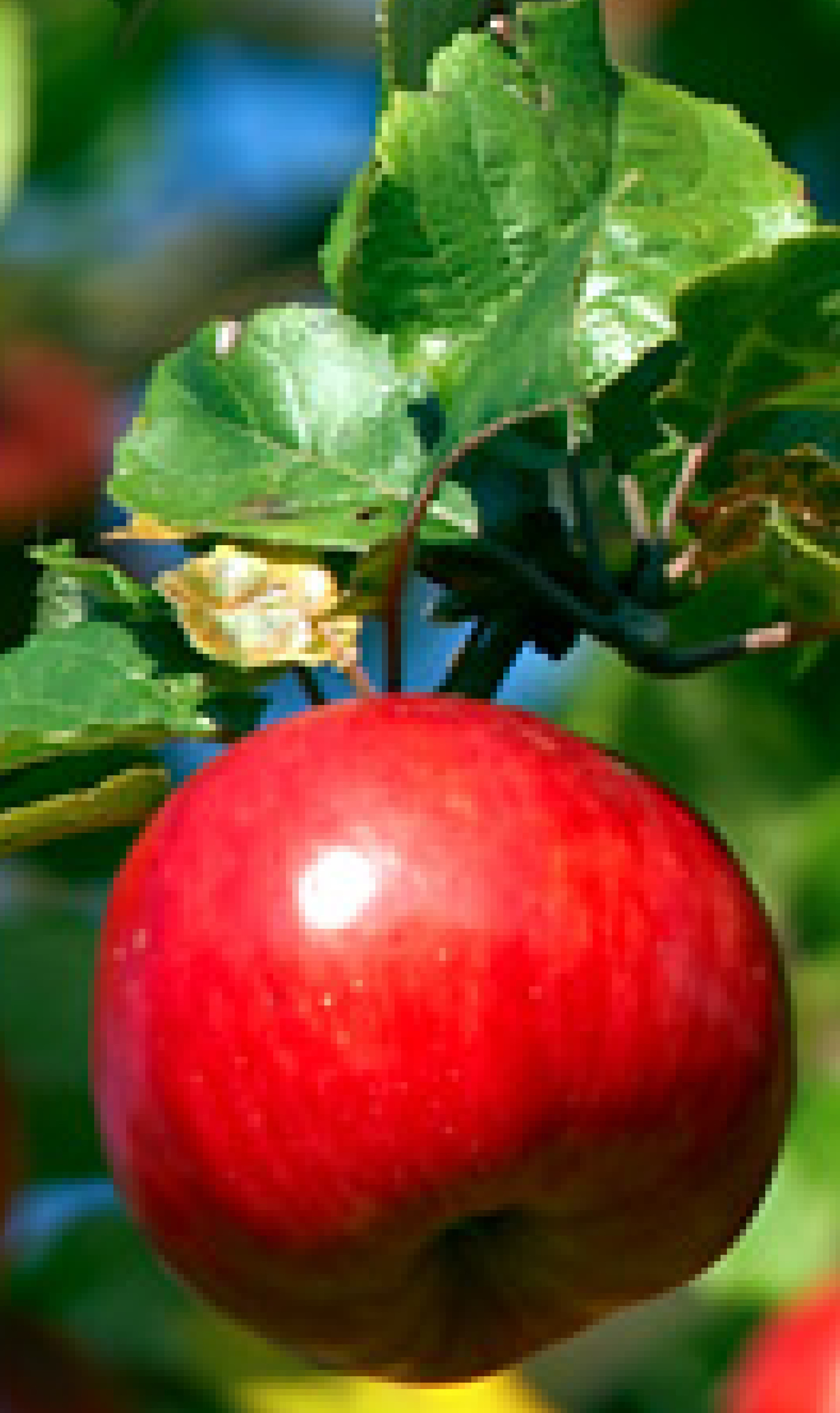 bright red apple 200x300