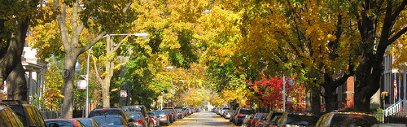 street with fall trees and cars 800 x250 px