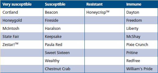 Susceptibility to apple scab by variety.